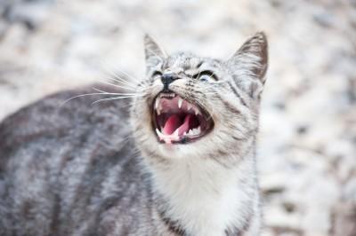 anger-management-worksheets-pic3