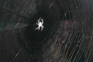 White profile of spider in center of web on dark background