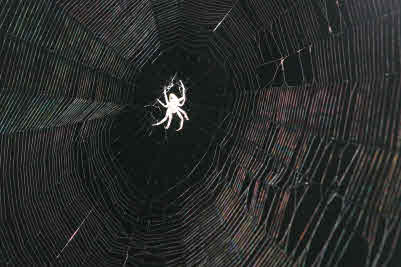 Spider White Profile Pic for Anger Management Worksheets